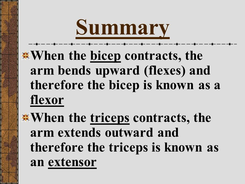Summary When the bicep contracts, the arm bends upward (flexes) and therefore the bicep is known as a flexor.