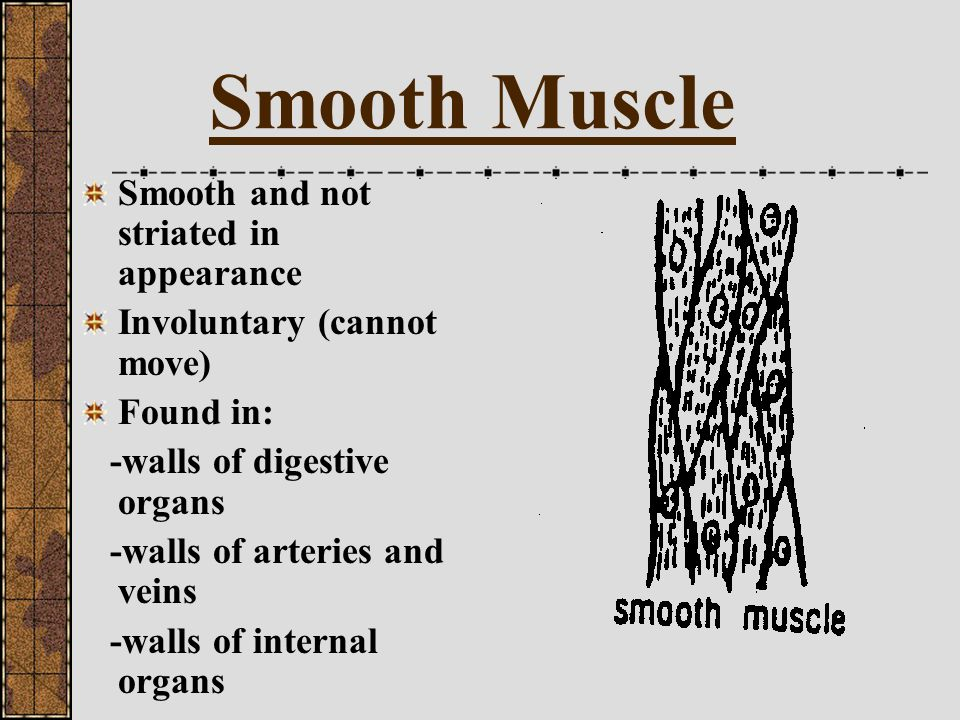 Smooth Muscle Smooth and not striated in appearance