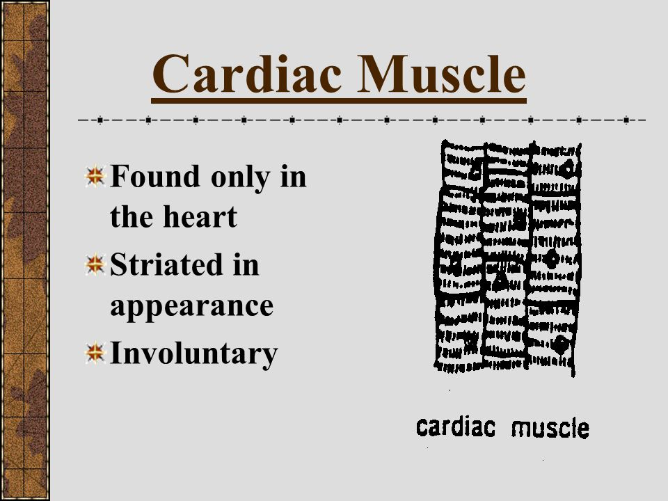 Cardiac Muscle Found only in the heart Striated in appearance