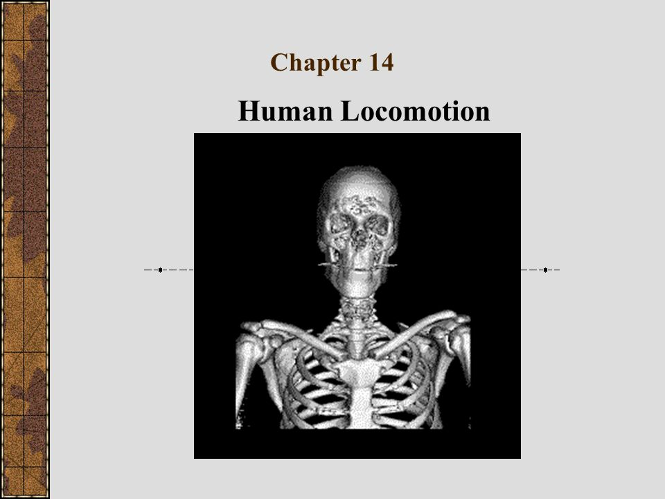 Chapter 14 Human Locomotion
