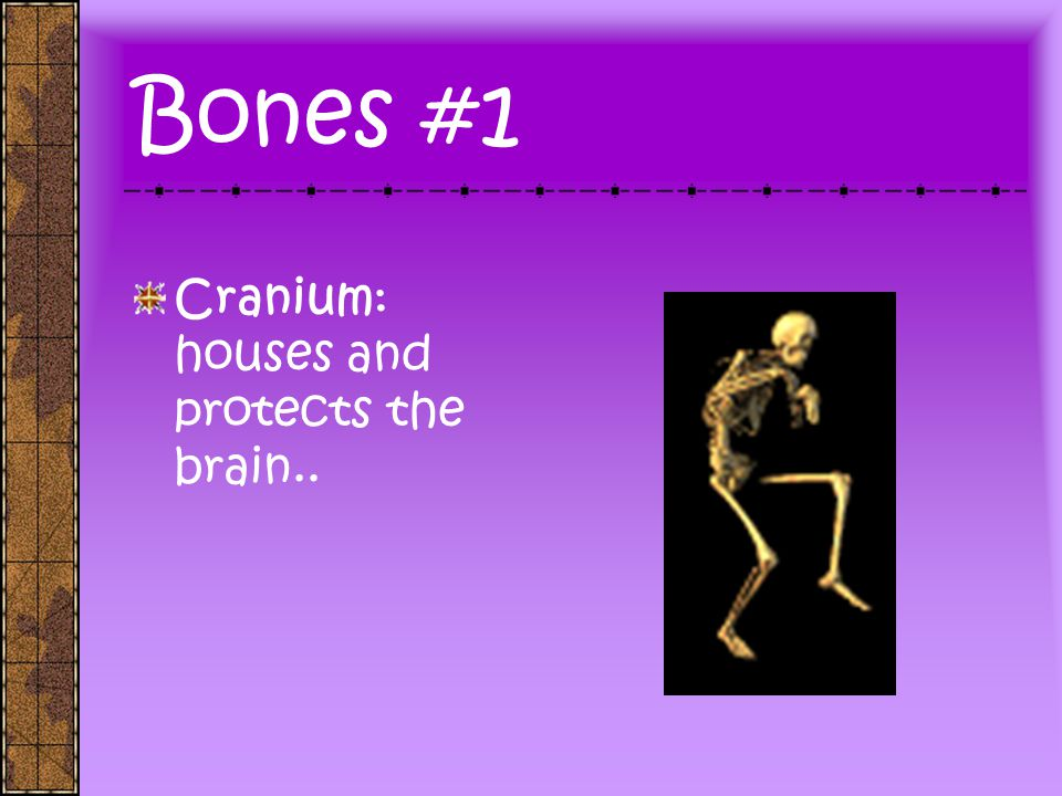 Bones #1 Cranium: houses and protects the brain..