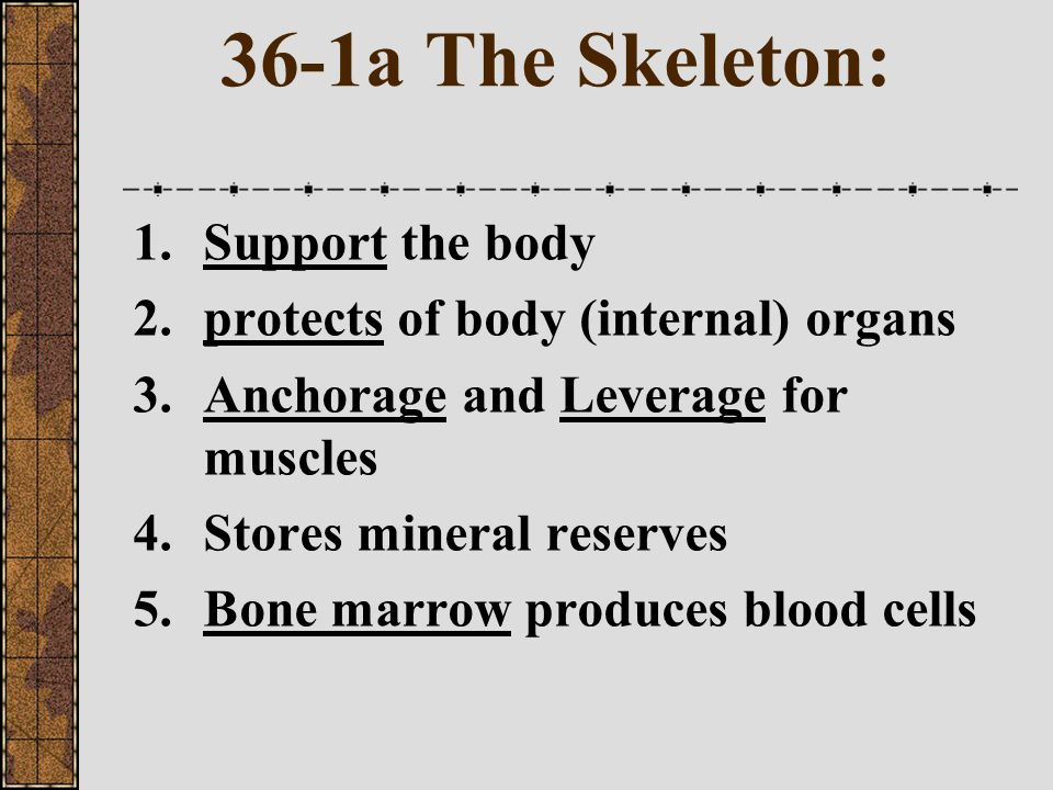 36-1a The Skeleton: Support the body
