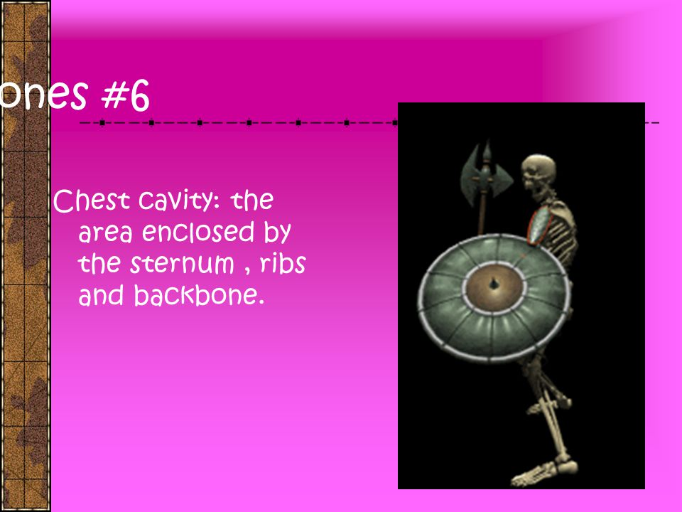 Bones #6 Chest cavity: the area enclosed by the sternum , ribs and backbone.