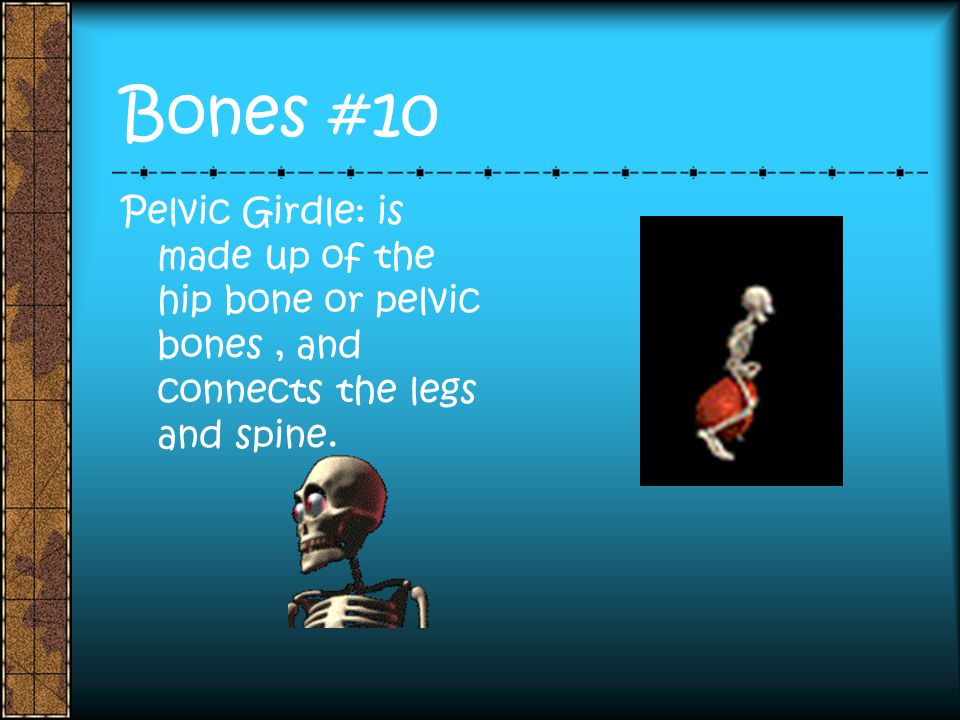 Bones #10 Pelvic Girdle: is made up of the hip bone or pelvic bones , and connects the legs and spine.