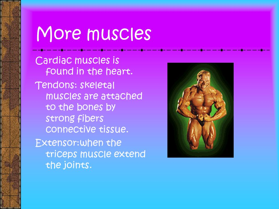 More muscles Cardiac muscles is found in the heart.