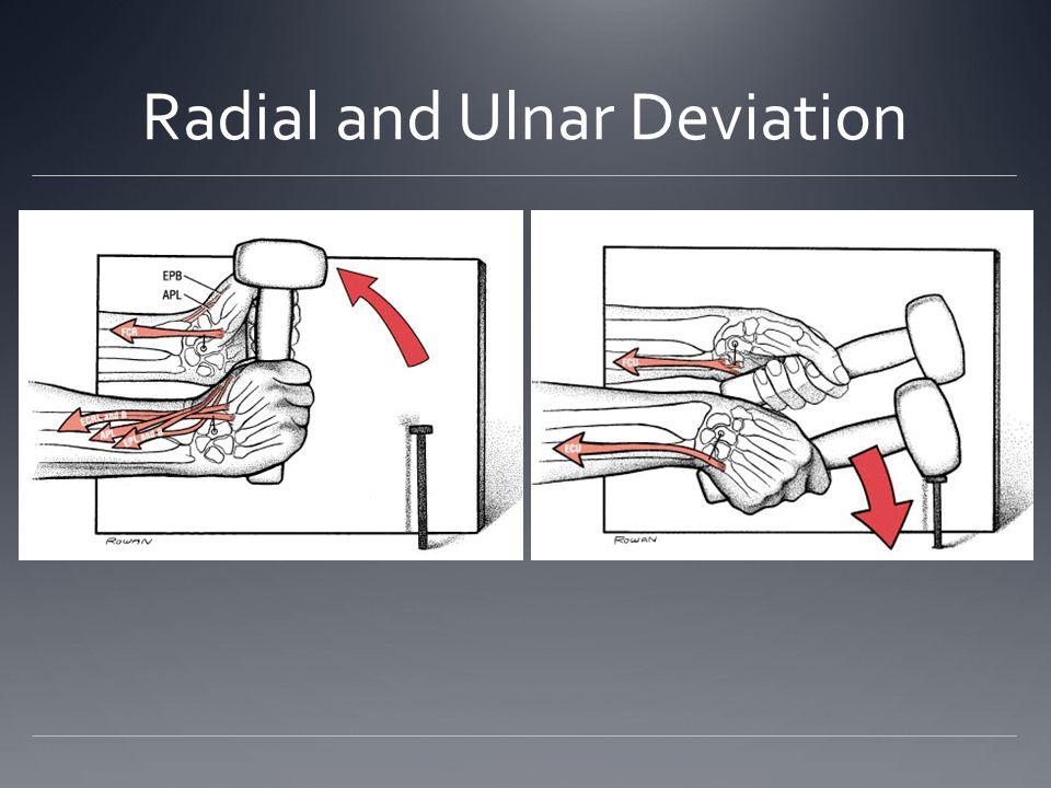 Radial and Ulnar Deviation