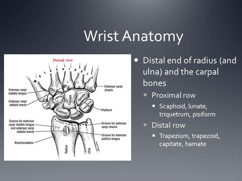 Wrist Anatomy Distal end of radius (and ulna) and the carpal bones