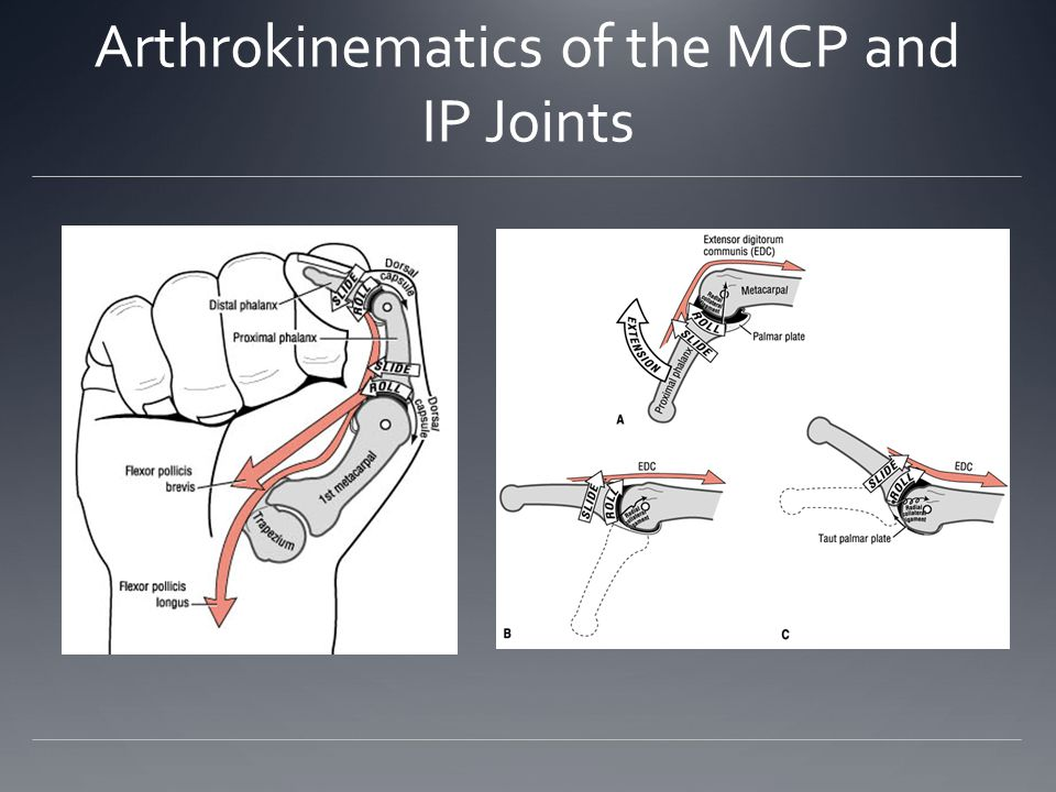 Arthrokinematics of the MCP and IP Joints