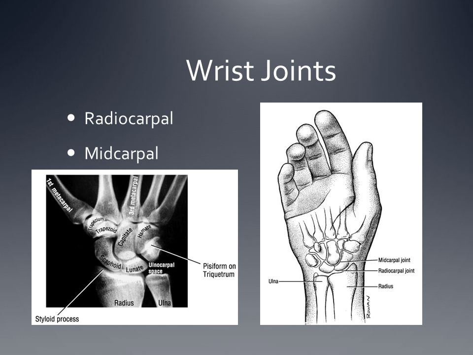 Wrist Joints Radiocarpal Midcarpal