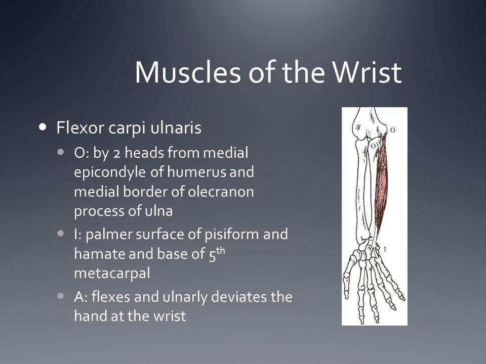 Muscles of the Wrist Flexor carpi ulnaris
