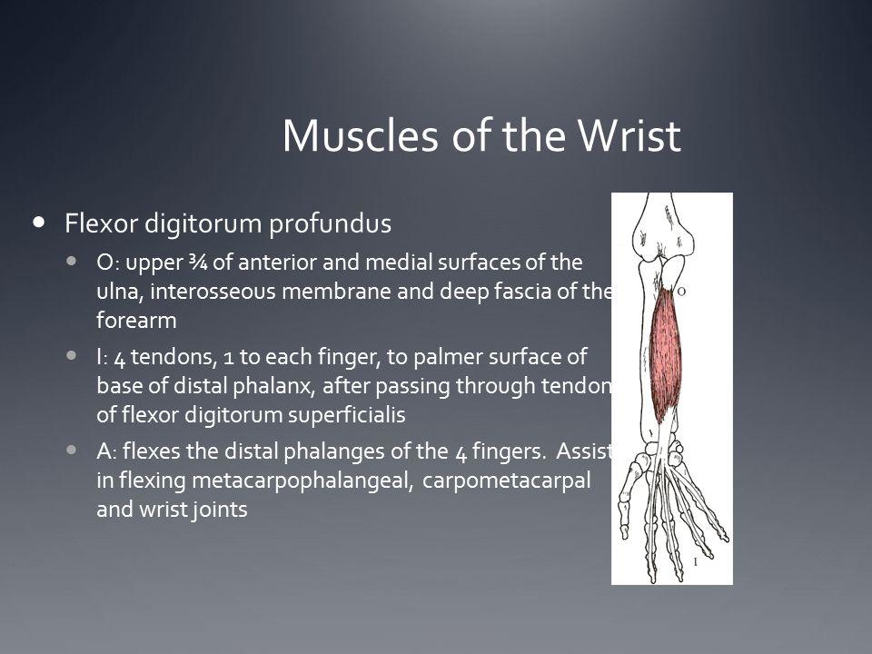 Muscles of the Wrist Flexor digitorum profundus