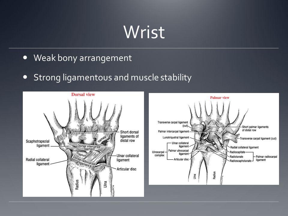 Wrist Weak bony arrangement Strong ligamentous and muscle stability
