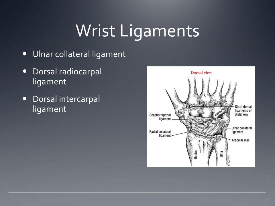 Wrist Ligaments Ulnar collateral ligament Dorsal radiocarpal ligament
