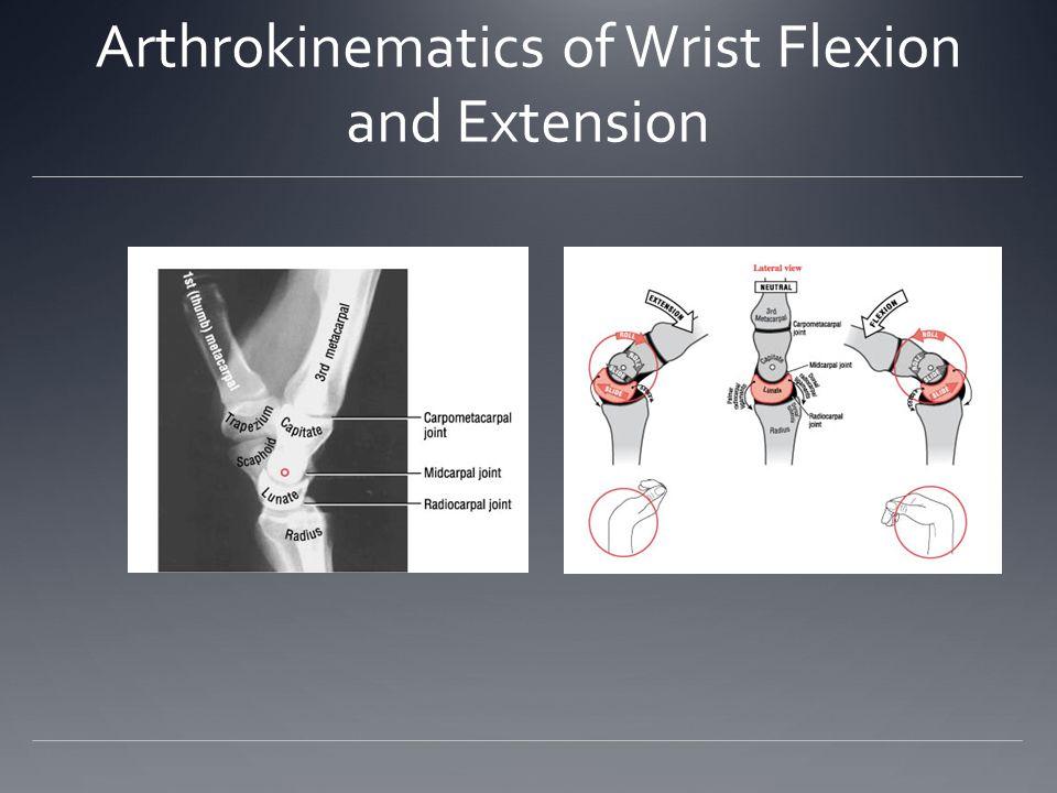 Arthrokinematics of Wrist Flexion and Extension