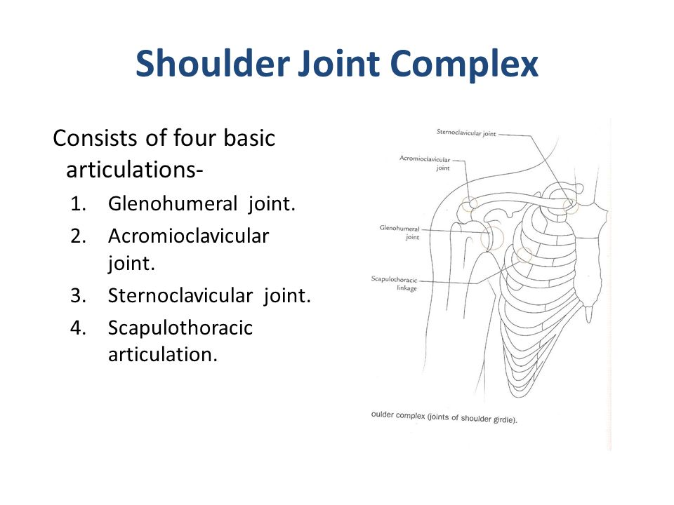 Shoulder Joint Complex