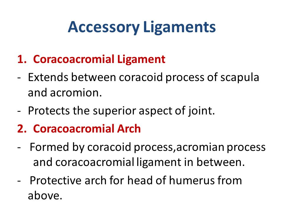 Accessory Ligaments Coracoacromial Ligament