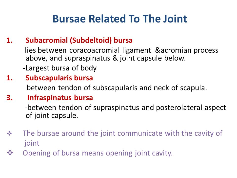 Bursae Related To The Joint