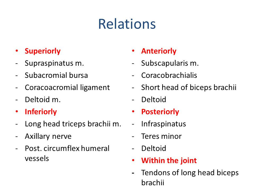 Relations Superiorly Supraspinatus m. Subacromial bursa