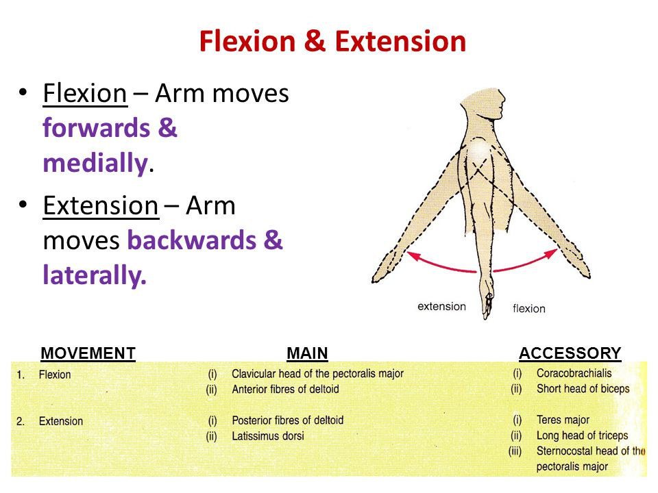 Flexion & Extension Flexion – Arm moves forwards & medially.