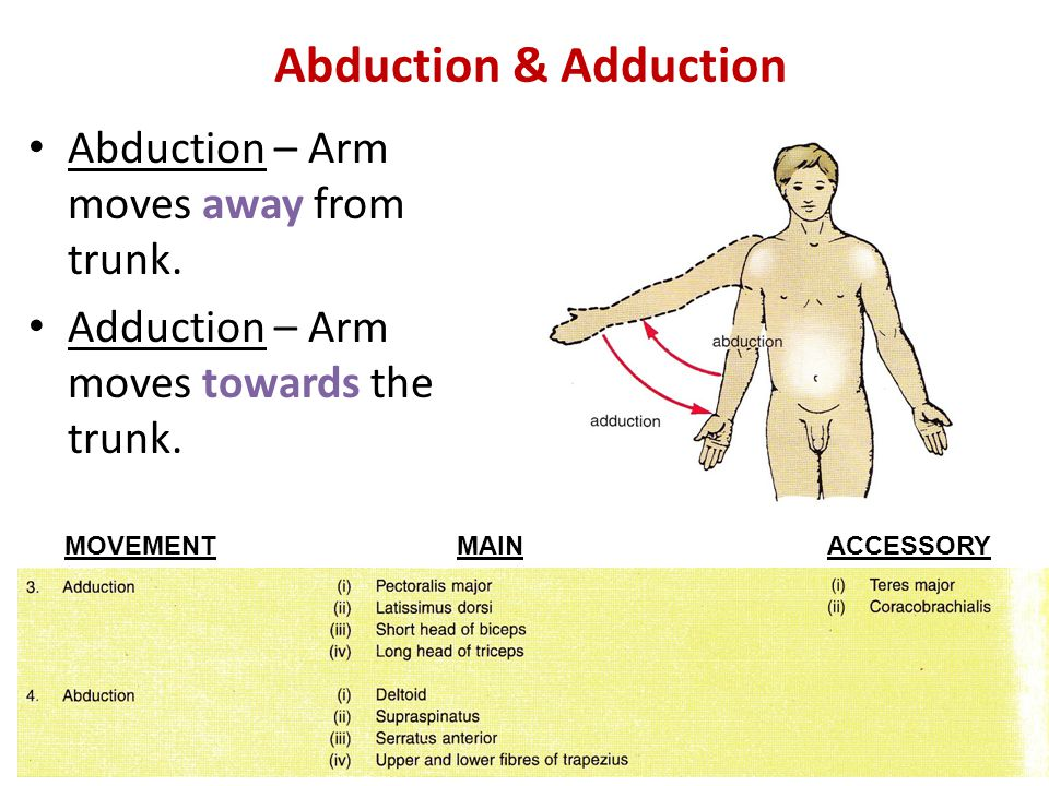 Abduction & Adduction Abduction – Arm moves away from trunk.