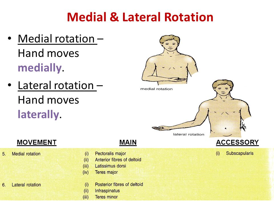 Medial & Lateral Rotation