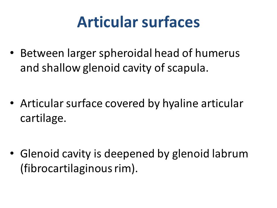 Articular surfaces Between larger spheroidal head of humerus and shallow glenoid cavity of scapula.