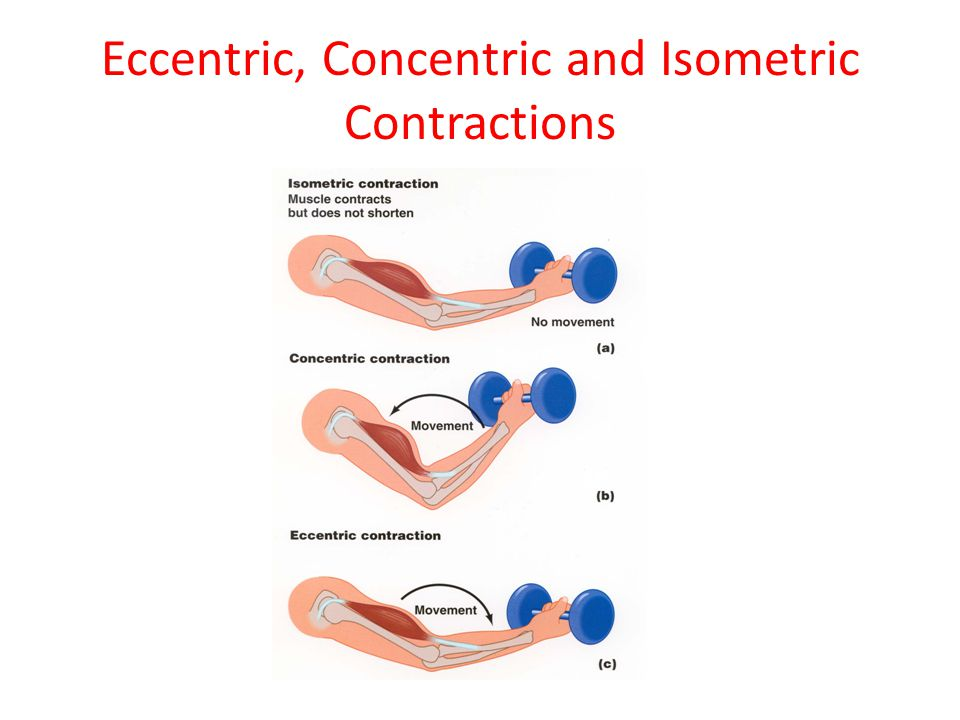 Eccentric, Concentric and Isometric Contractions