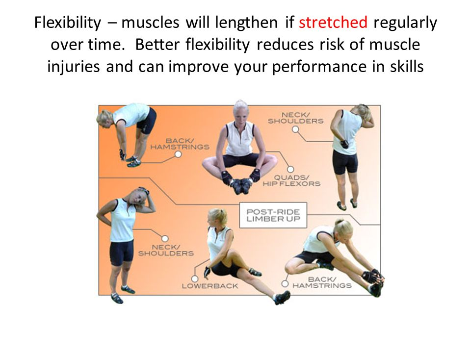 Flexibility – muscles will lengthen if stretched regularly over time