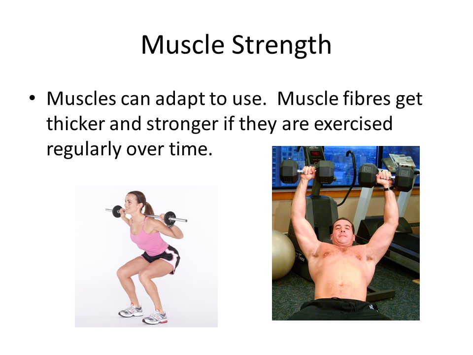 Muscle Strength Muscles can adapt to use.