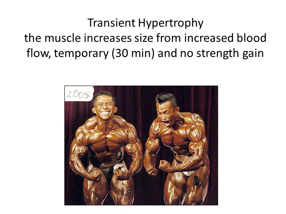 Transient Hypertrophy the muscle increases size from increased blood flow, temporary (30 min) and no strength gain