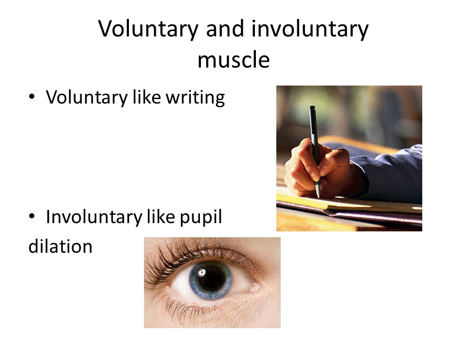 Voluntary and involuntary muscle