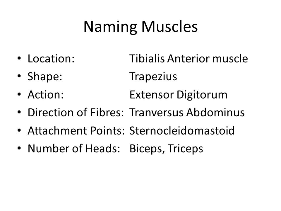 Naming Muscles Location: Tibialis Anterior muscle Shape: Trapezius