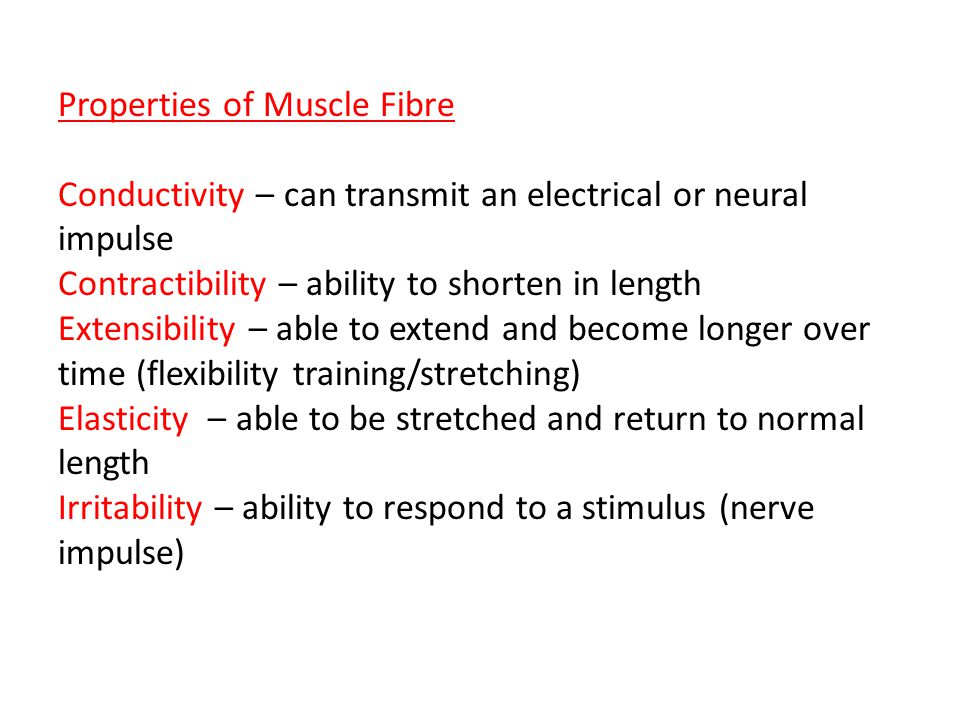 Properties of Muscle Fibre Conductivity – can transmit an electrical or neural impulse Contractibility – ability to shorten in length Extensibility – able to extend and become longer over time (flexibility training/stretching) Elasticity – able to be stretched and return to normal length Irritability – ability to respond to a stimulus (nerve impulse)
