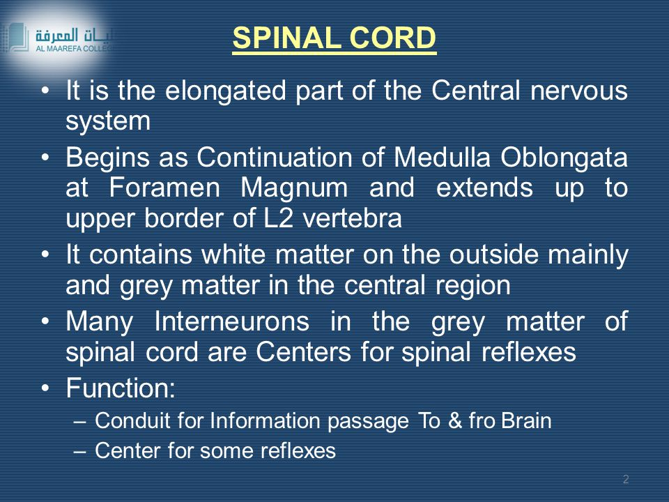 SPINAL CORD It is the elongated part of the Central nervous system