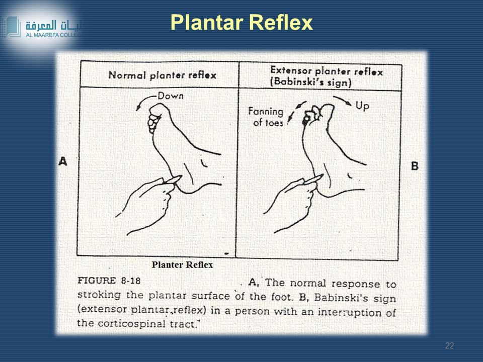 Plantar Reflex