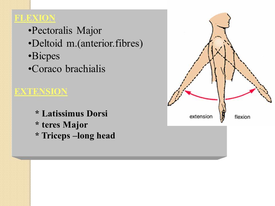 Deltoid m.(anterior.fibres) Bicpes Coraco brachialis