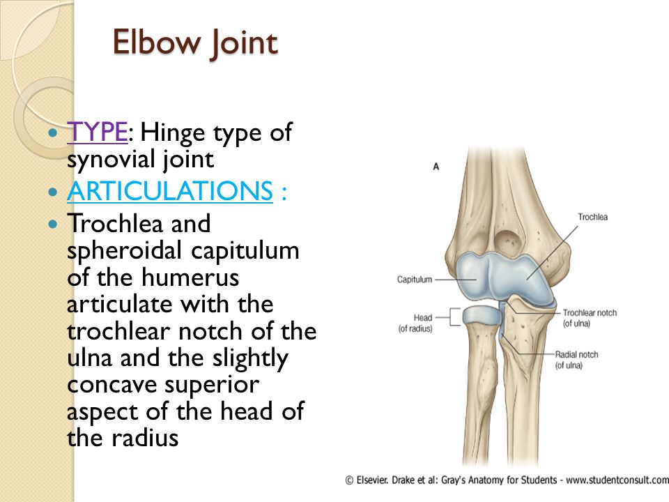 Elbow Joint TYPE: Hinge type of synovial joint ARTICULATIONS :