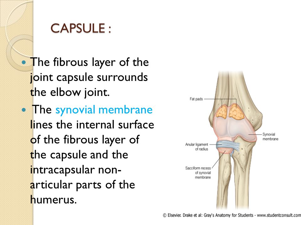 CAPSULE : The fibrous layer of the joint capsule surrounds the elbow joint.