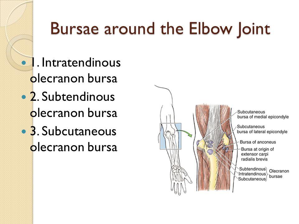 Bursae around the Elbow Joint