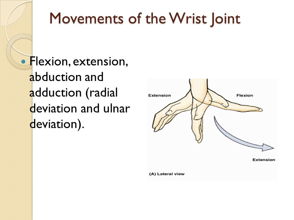 Movements of the Wrist Joint