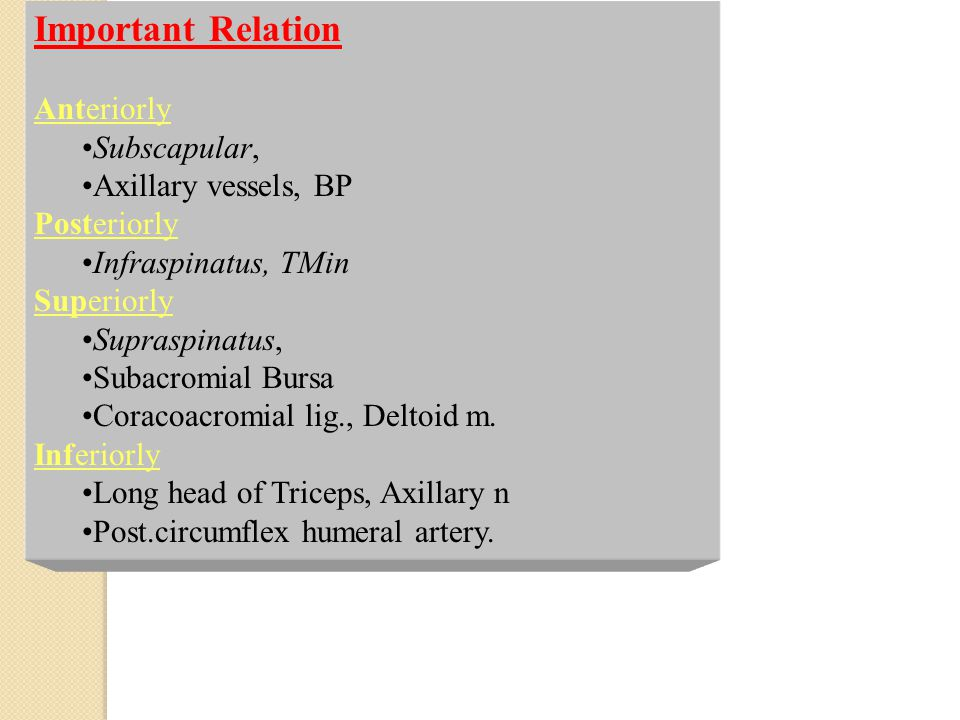 Important Relation Anteriorly Subscapular, Axillary vessels, BP