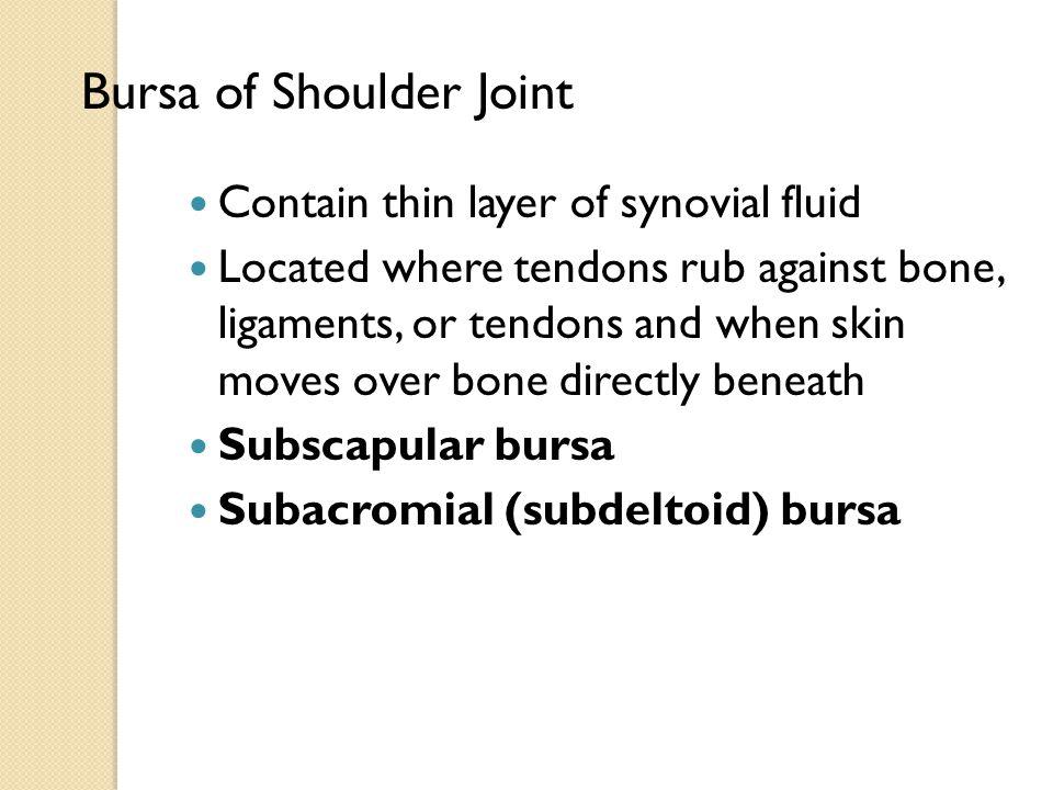 Bursa of Shoulder Joint