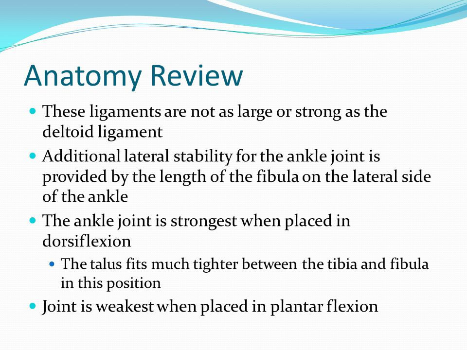 Anatomy Review These ligaments are not as large or strong as the deltoid ligament.