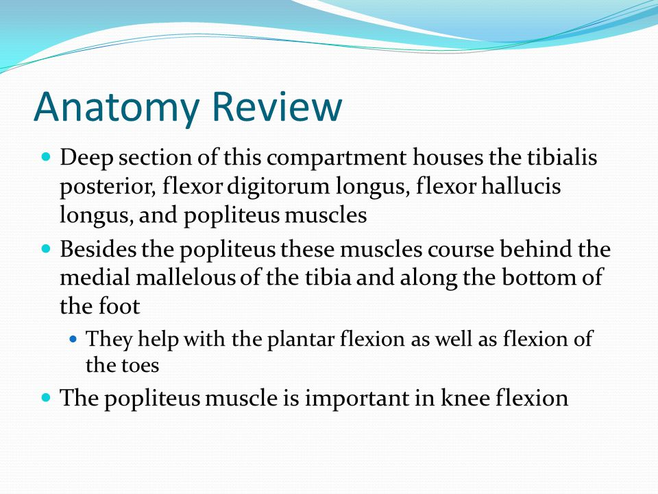 Anatomy Review Deep section of this compartment houses the tibialis posterior, flexor digitorum longus, flexor hallucis longus, and popliteus muscles.