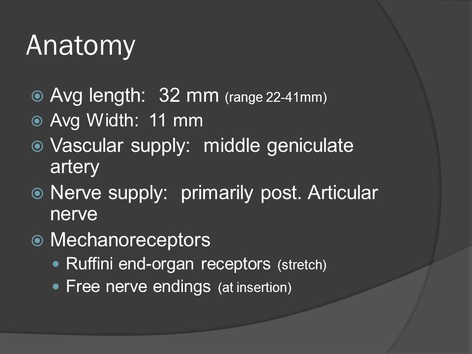 Anatomy Avg length: 32 mm (range 22-41mm)