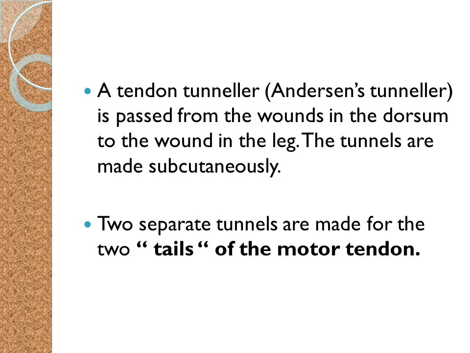 A tendon tunneller (Andersen's tunneller) is passed from the wounds in the dorsum to the wound in the leg. The tunnels are made subcutaneously.