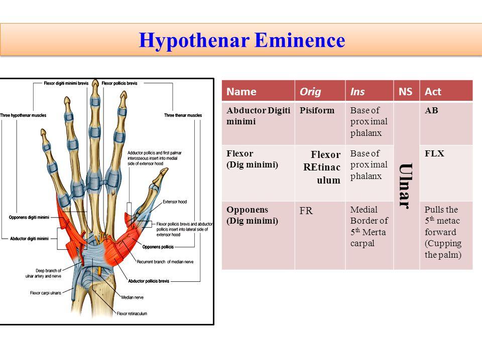Hypothenar Eminence Ulnar Act NS Ins Orig Name Flexor REtinaculum FR