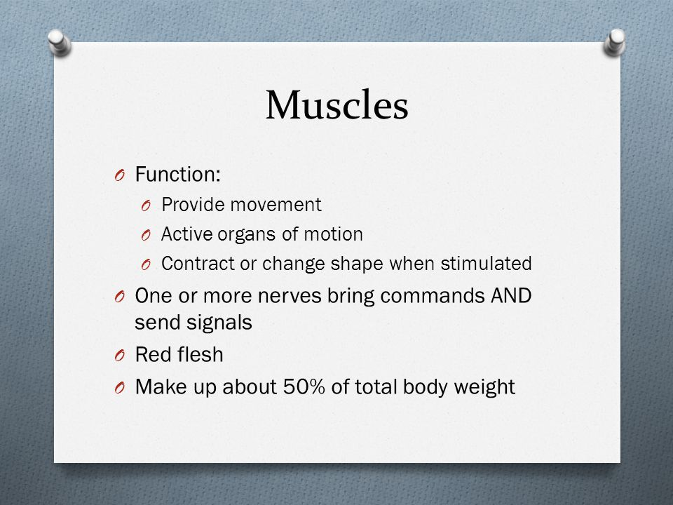 Muscles Function: One or more nerves bring commands AND send signals