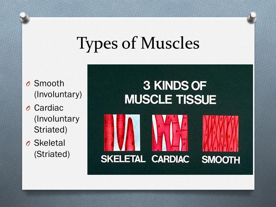 Types of Muscles Smooth (Involuntary) Cardiac (Involuntary Striated)