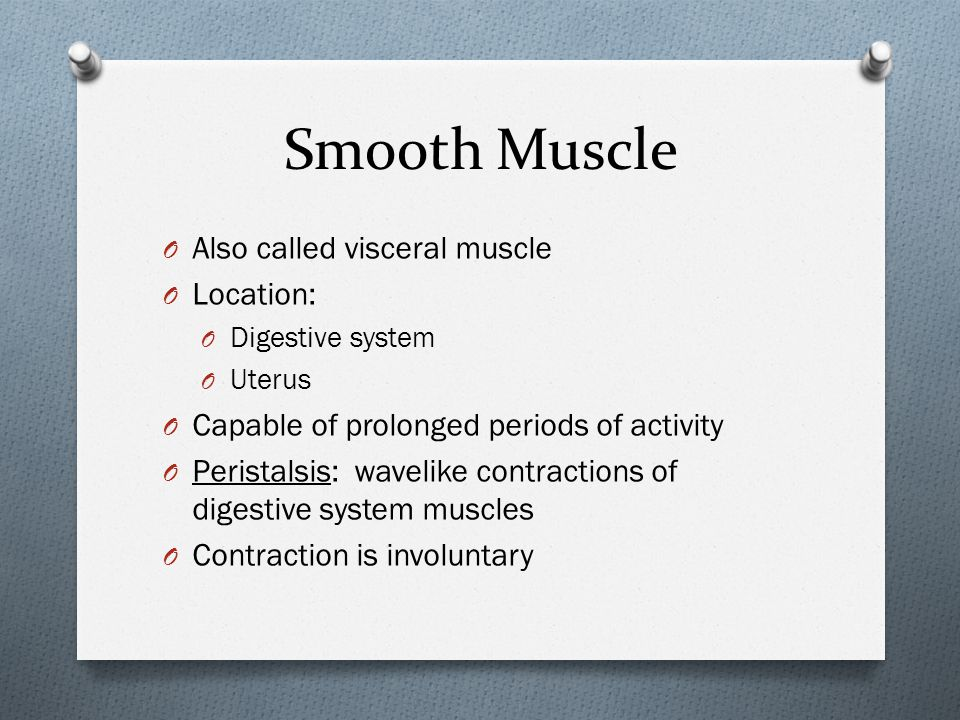 Smooth Muscle Also called visceral muscle Location: